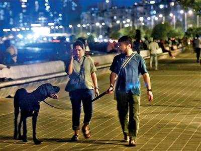 Civic bodies' misleading posters lead owners to abandon pets