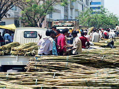 A sour mood over sugarcane