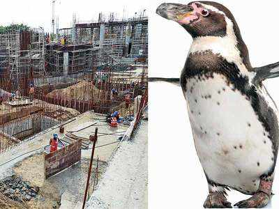 After Mumbai, Humboldt penguins to make Ahmedabad Science City their home