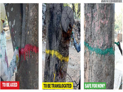 225 trees marked in red to indicate they will face the axe for widening of Jayamahal and Ballari Roads