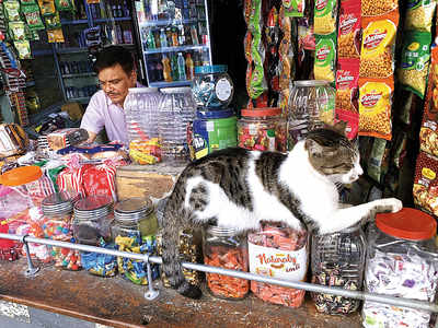 Mumbai Speaks: Guardian of the treats