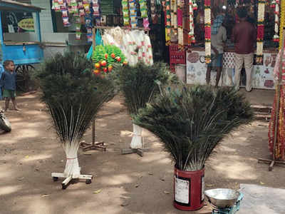 Two caught for illegally selling peafowl feathers