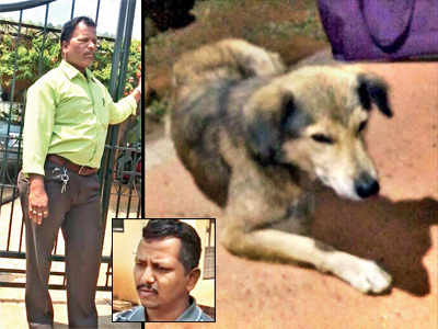 Dog beaten to death in Lonavala