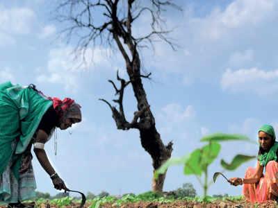 Irregularities in farm loan waiver scheme: MNS