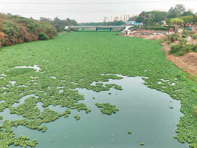 Mosquito menace casts shadow on Old Sangvi