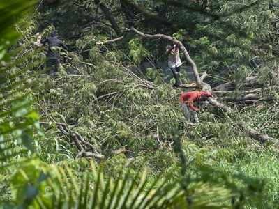 Aarey Forest row: Submit pictures of afforestation, transplantation, and height of trees planted by November 15, SC tells Mumbai Metro