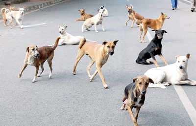 BBMP to track strays with microchips soon