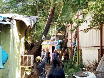 10 trees hacked in Versova as BMC depts fail to communicate