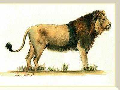 FLOCKMUSIC : A true king: Watching lions in mango land