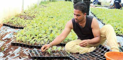 'Tray method' makes turmeric farming lucrative