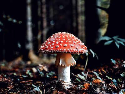 PLAN AHEAD: Discovering mushrooms
