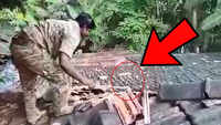 King cobra: Man catches with bare hands