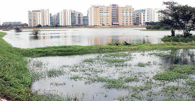 Greens want govt to act on dying lakes