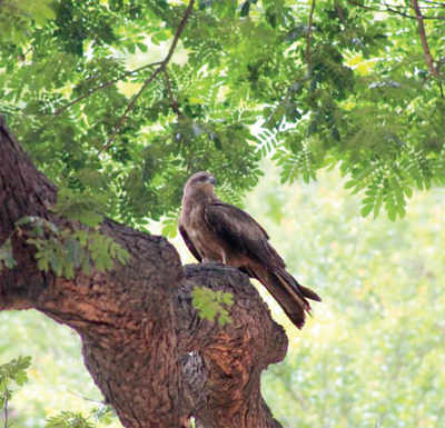 BBMP set to kill two birds with one stone