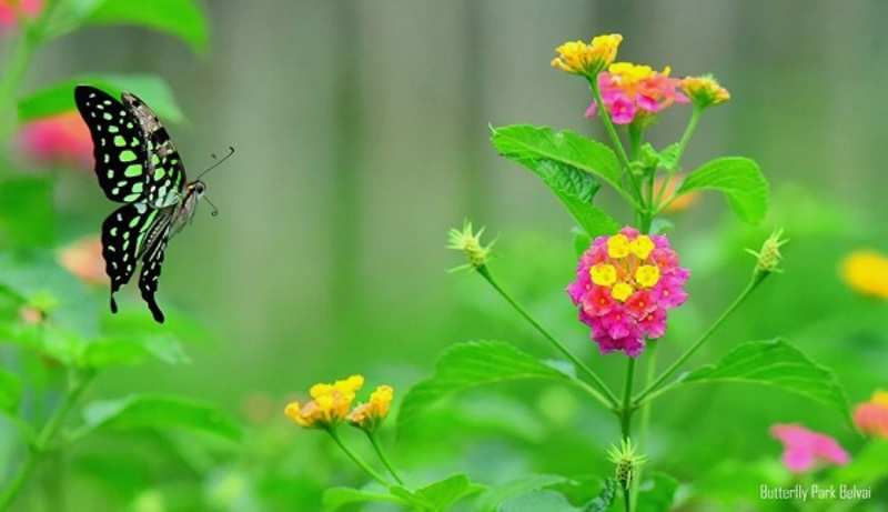 The park at Dakshina Kannada is a home to stunning species of butterflies