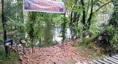 Karnataka: Star hotel's backyard turns into a resort for frogs