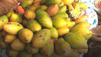 Mango goes out of aam janta's reach in Kanpur