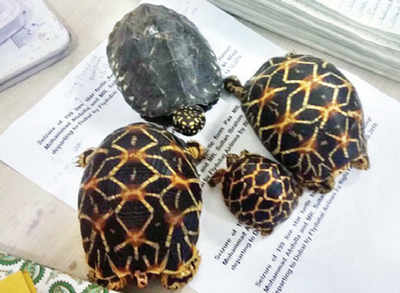 Cousins caught smuggling rare turtles, tortoises