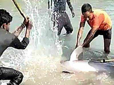 Dolphin brutally killed in UP