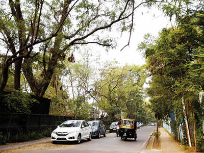 Overgrown trees need trimming, asserts KP