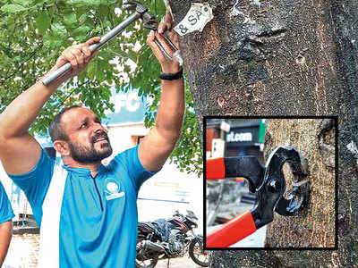 How this crusader's unique endeavour to save trees has caught nation's imagination