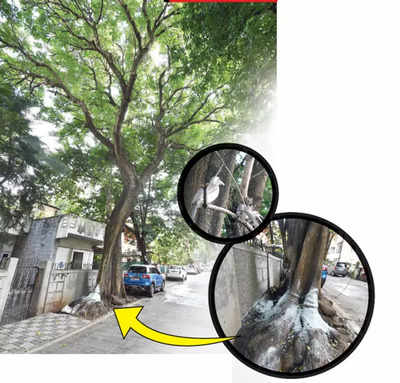 NOW, ACID ATTACK… ON A TREE