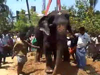 TN: Ailing elephant taken 200 km away for wedding function, dies on way back