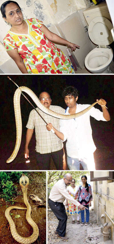 Family's horror as 6-ft cobra pops out of toilet
