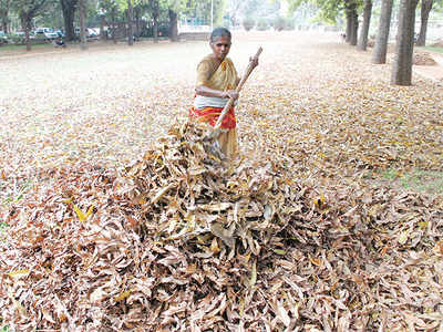 BBMP to get power from dry leaves