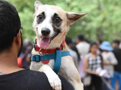 Bengaluru and Mumbai are the most pet-friendly cities in India, reveals survey