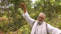 'Mango Man' grows new variety named after Amit Shah