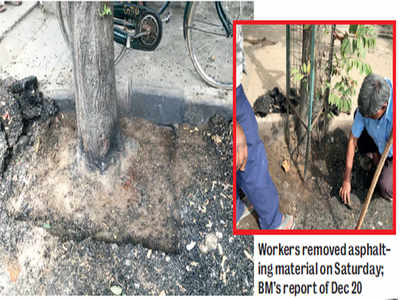 BBMP gives trees their space