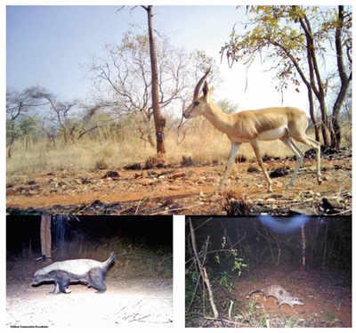 Bengaluru has a wild side that hadn't been seen