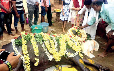 Karnataka: Kambala loses a warrior