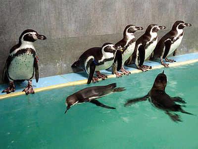 'Won't allow penguin exhibit till probe's over'