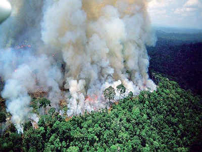 Fake News Buster:  A fire's raging in Amazon forest, but photos are old