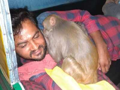 Watch: Tipsy monkey creates rumpus in a Bengaluru bar