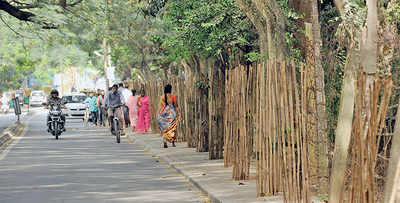 BBMP to distribute 9 lakh saplings this year