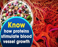 Research: Know how proteins stimulate blood vessel growth