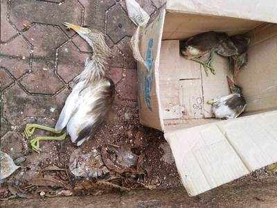 HUNDREDS OF BIRDS KILLED, MAIMED AT GOVT OFFICE CAMPUS
