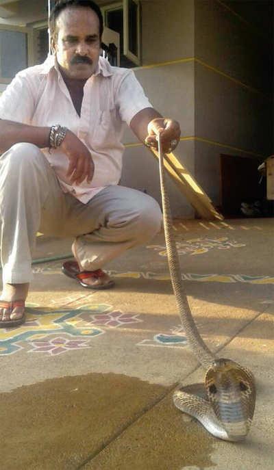 Mysuru resident finds a 5.5-ft cobra under his mattress