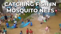 Odisha: Locals use mosquito nets to catch fish from river in Angul