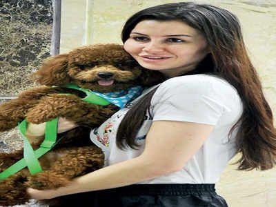 Giorgia wants end to Yulin Festival carnage