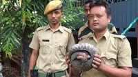 Siliguri: Pangolin rescued, 5 Bhutan nationals arrested