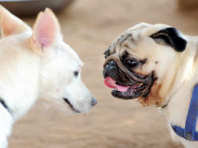Dog lovers unhappy with the new bylaws
