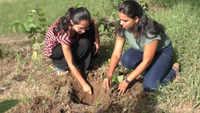 Surat: University asks students to plant saplings as 'punishment'