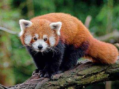 Only one-fifth of Meghalaya fauna species discovered so far: Official
