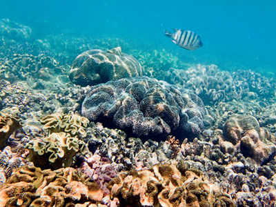 Major coral bleaching at Barrier Reef