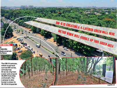 IIM-B's foresight will keep it green while Metro ravages the road outside