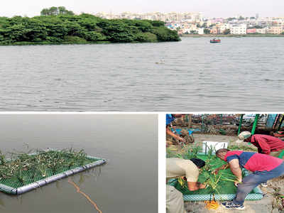 Islands of 'hope' at Madiwala Lake